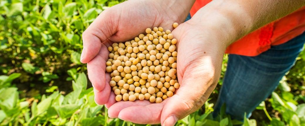 Soybeans NonGMO